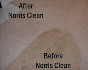 carpet cleaing for Indianapolis, Carmel, Fishers, Zionsville Avon and Greenwood